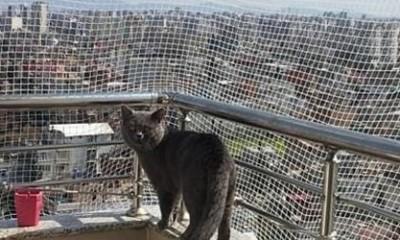 Adana Kedi Filesi